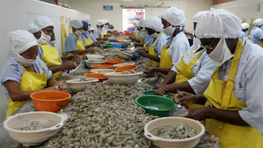 Shrimp industry rescuing colombia's female conflict victims
